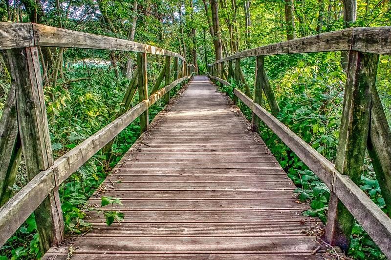 дървен мост сред гора